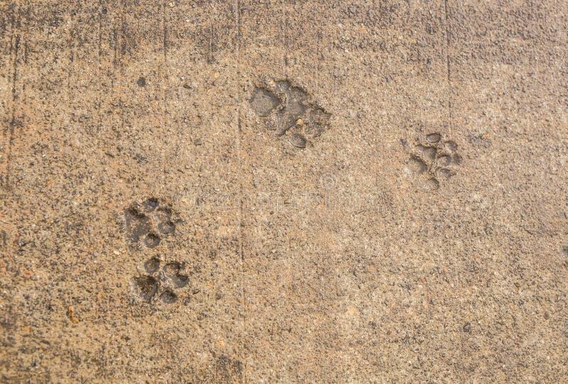 Stampa della zampa del cane su asfalto immagini stock