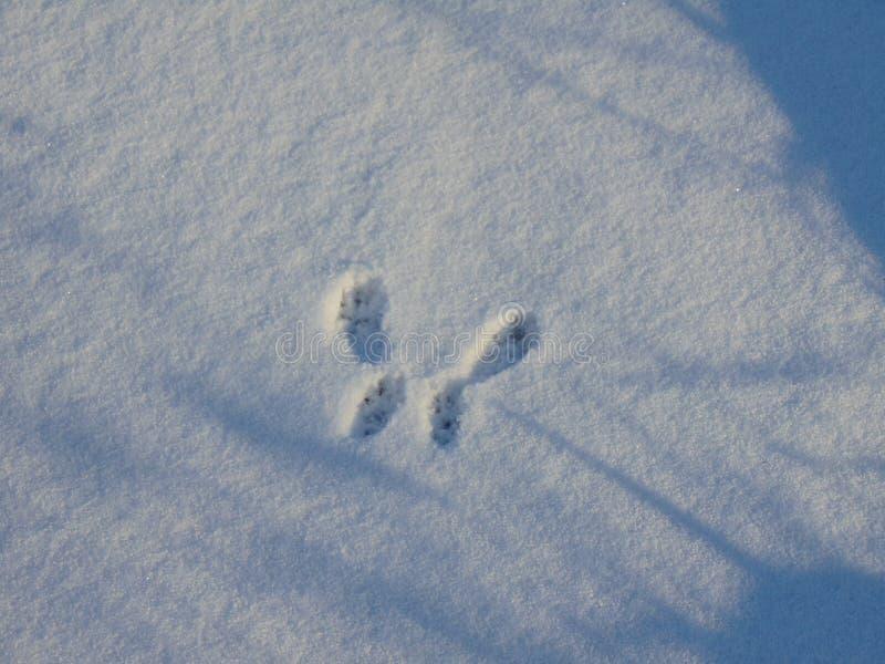 Stampa fresca della zampa del cane della farfalla della neve immagini stock libere da diritti