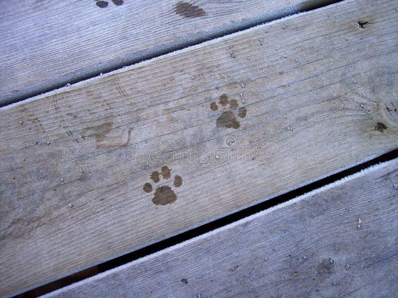 Download Stampe 1 del gatto immagine stock. Immagine di gatto, legno - 214865
