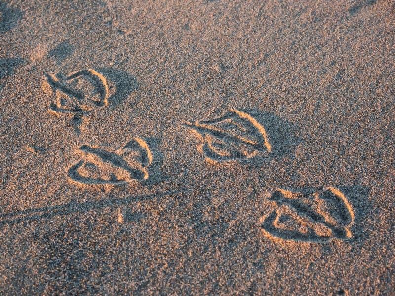 Stampe del piede del gabbiano in sabbia fotografia stock