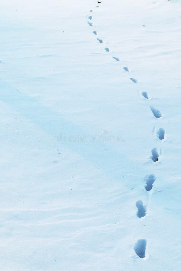 Stampe della neve fotografie stock libere da diritti