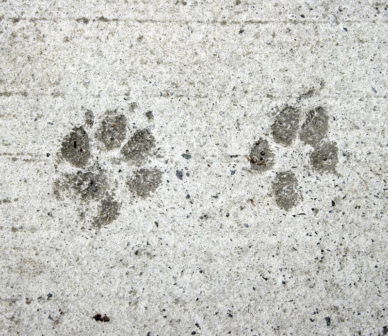 Stampe della zampa del gatto e del cane fotografia stock libera da diritti