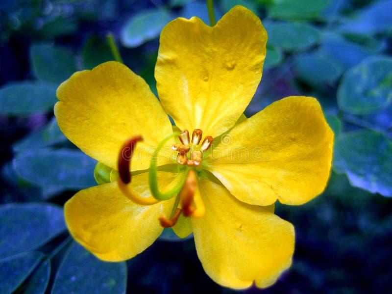 Stampe gialle di arti della carta da parati del fondo del fiore selvaggio fotografia stock