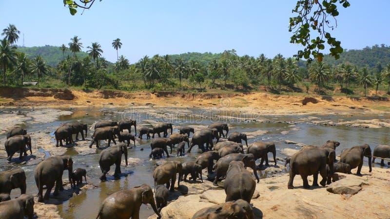 Download Stampede stock image. Image of elephants, herd, elephant - 3860717