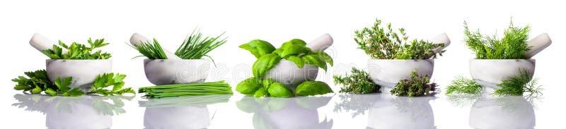 Stamper en Mortier met Groene Kruiden op Witte Achtergrond stock foto