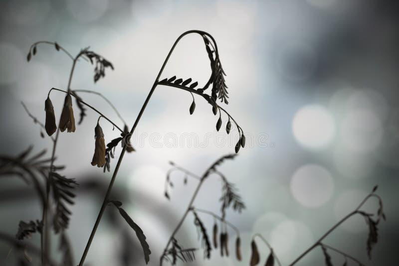 Stamsilhouetten stock afbeeldingen