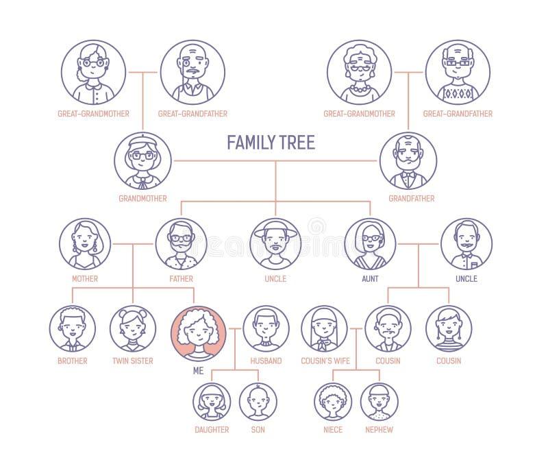 Stamträd-, stamträd- eller anordiagrammall med män s och stående för kvinnor s i runda ramar Framställning av royaltyfri illustrationer