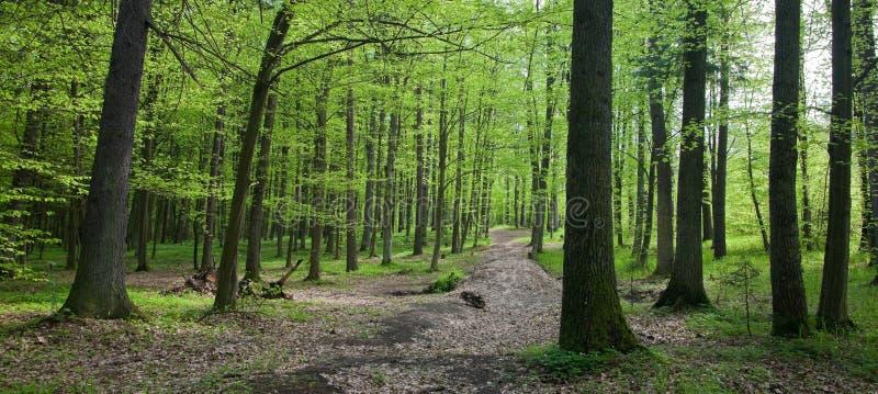 Stand à feuilles caduques de première source photo libre de droits
