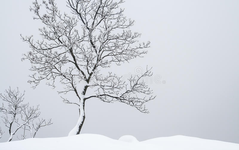 Stand alone tree. Alone tree covered with snow before a big fog royalty free stock photo