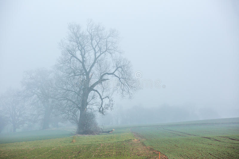 Stand alone tree in a cold weather stock images