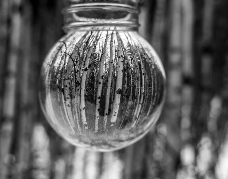 A Stand of Birch Trees Make for a Nice Vertical Line Image. An old mason jar makes for a lightbulb look for this black and white image shows off this stand of stock photography
