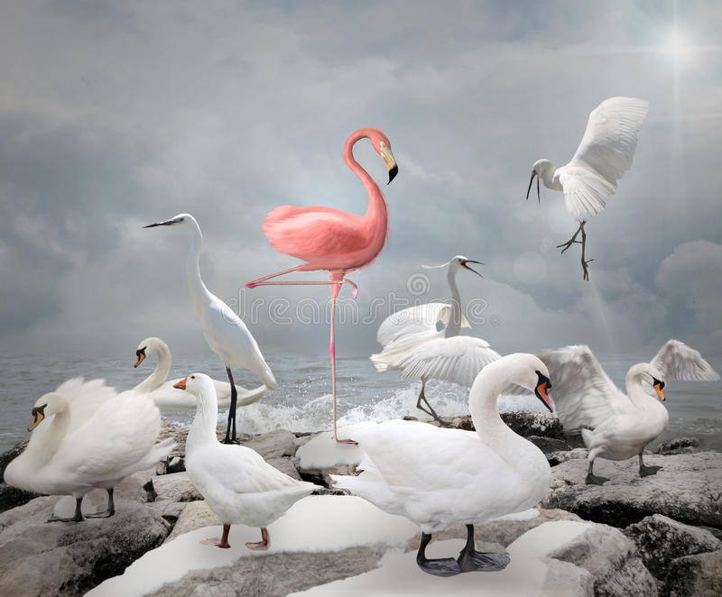 Stand out from a crowd - Flamingo vector illustration
