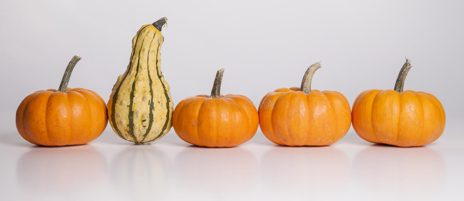 The Stand Out Gourd Royalty Free Stock Image