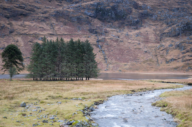 The stand of pines on the shores of Loch Coire Shubh royalty free stock image