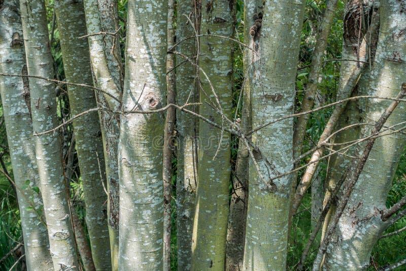Stand von Bäumen - Nahaufnahme stockbilder