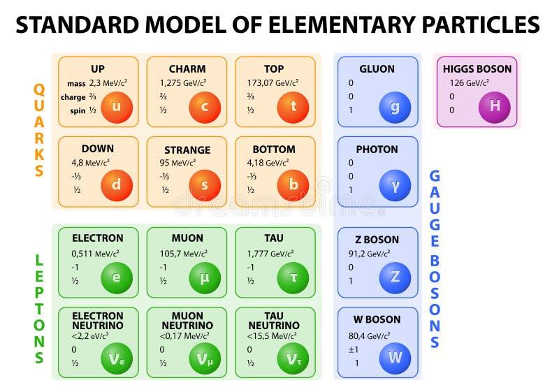 Standaardmodel van elementaire deeltjes vector illustratie