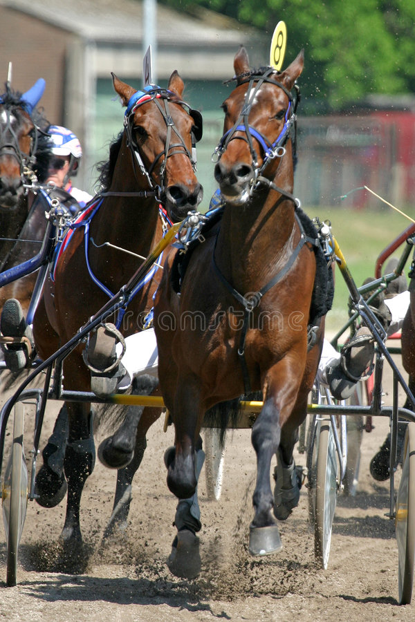 Standardbred stockbilder