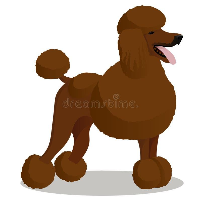 Standart poodle white cartoon dog vector illustration