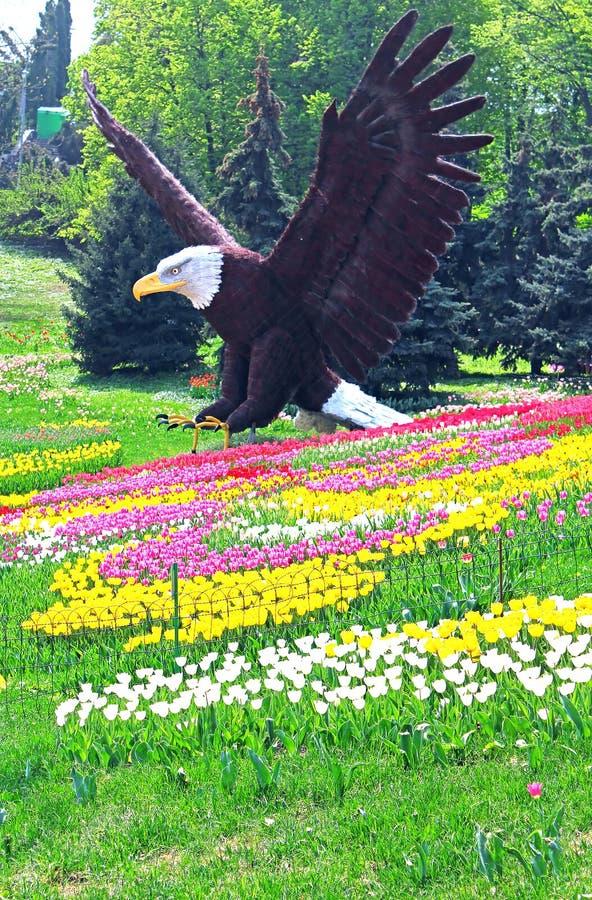 Standbeeld van kale adelaar en gebied van tulpen royalty-vrije stock fotografie