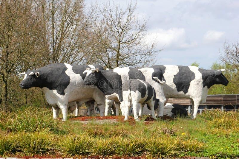 Standbeelden van Nederlandse die koeien van steen, Holland worden gemaakt stock foto's