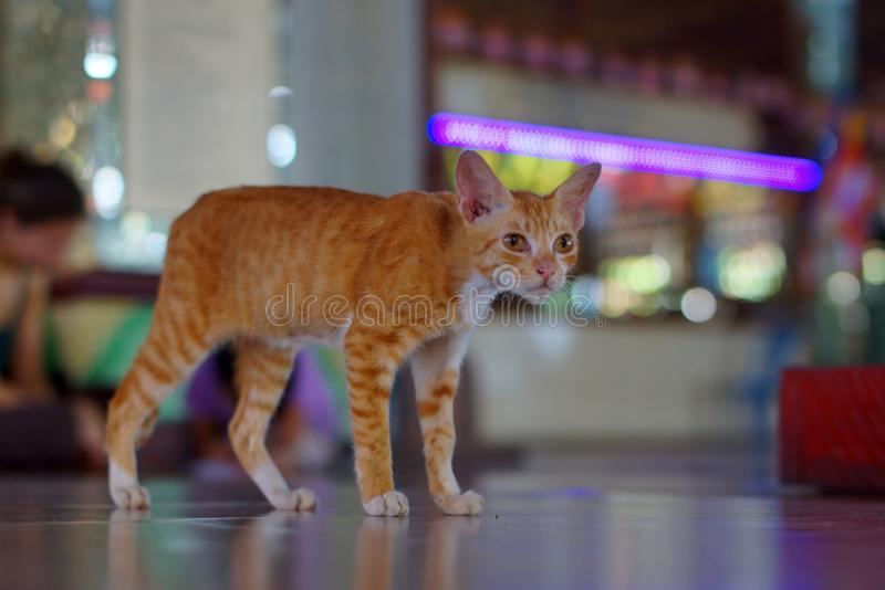 Standing cat in Temple of Yangon, Burma, Asia. Standing cat in Chaukhtatgyi Buddha Temple in Yangon, Burma, Asia stock photo