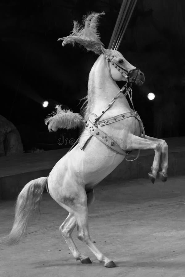 Standing Horse stock photos
