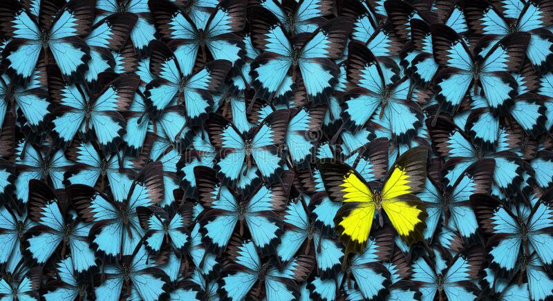 Standing out from the crowd concept royalty free stock photography