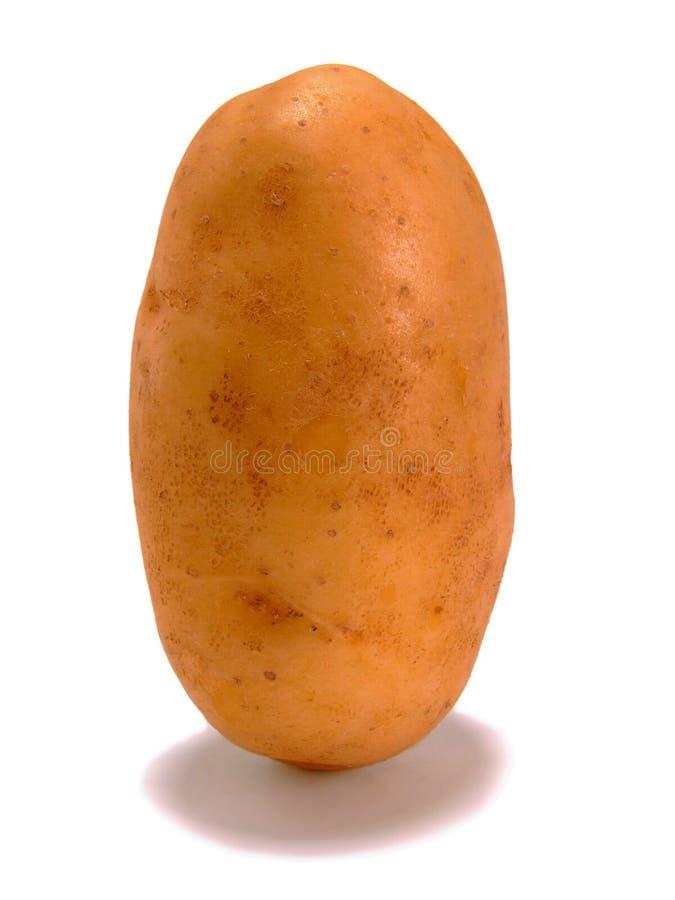 Standing Potato royalty free stock photo