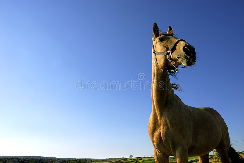 Standing proud royalty free stock photo