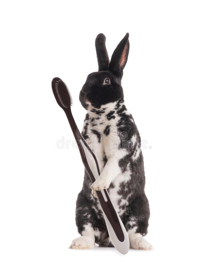 Free Standing Rabbit Black And White With A Brush In Its Paws Isolated On A White Background Royalty Free Stock Photography - 194708627