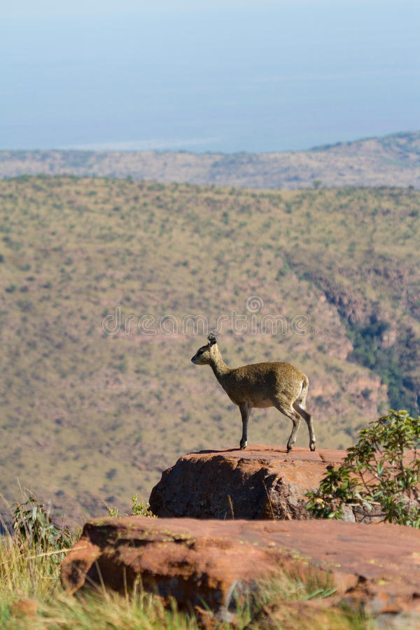Download Standing on a rock stock image. Image of rock, africa - 22042119