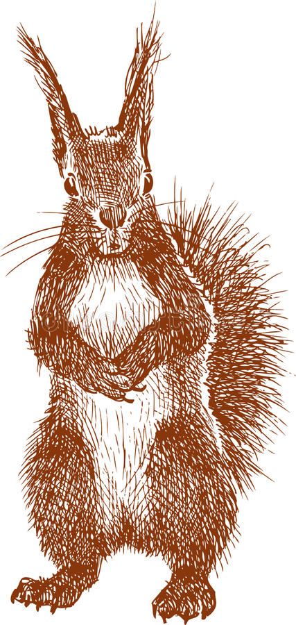 Standing Squirrel Stock Photography