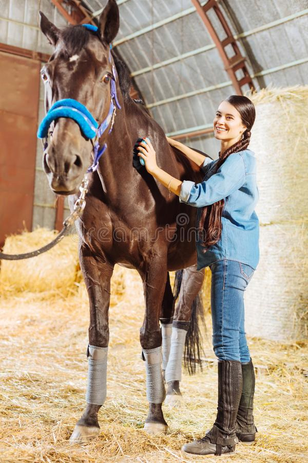 Happy horsewoman standing in big stable and cleaning horse. Standing in stable. Happy beautiful good-looking horsewoman standing in big stable and cleaning horse royalty free stock images