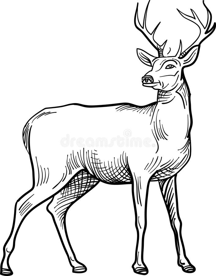 Standing stag line art image. Black and white line art isolated illustrated standing deer abstract image royalty free illustration