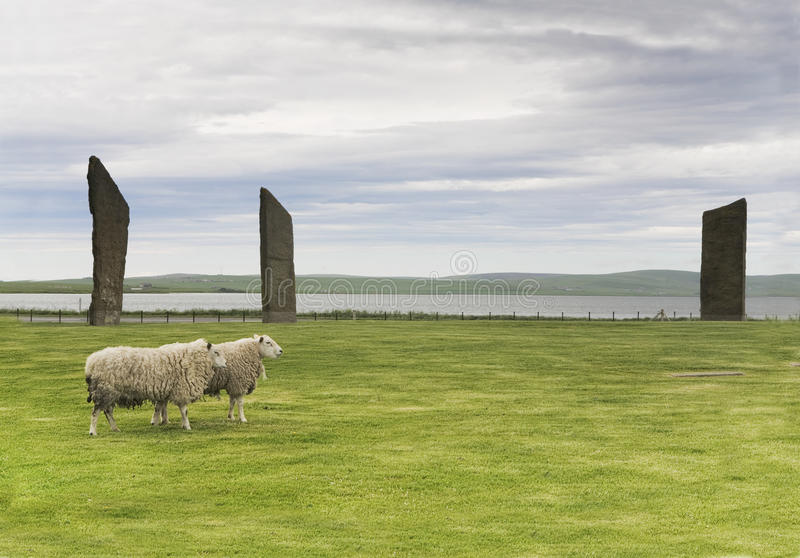 Standing Stones of Stenness, Orkney, with a pair of sheep stock images