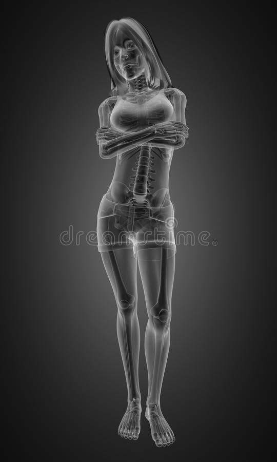 Download Standing woman radiography stock illustration. Illustration of radiology - 23361965