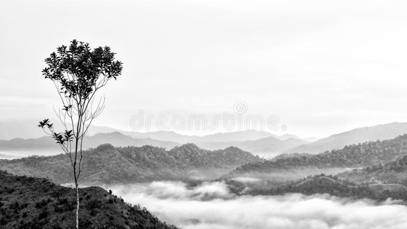 Standout Tree. This shot is taken in Malaysia. Beautiful sea of clouds and layers upon layers of mountain made this a peaceful and beautiful landscape. You can stock image