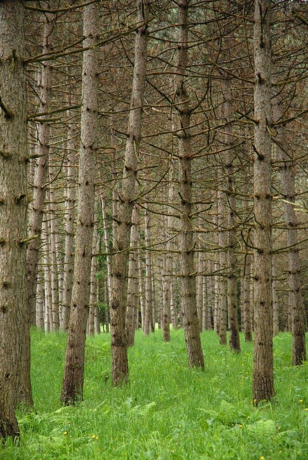 Download Standplatz der Bäume stockfoto. Bild von frontseite, nebel - 858896