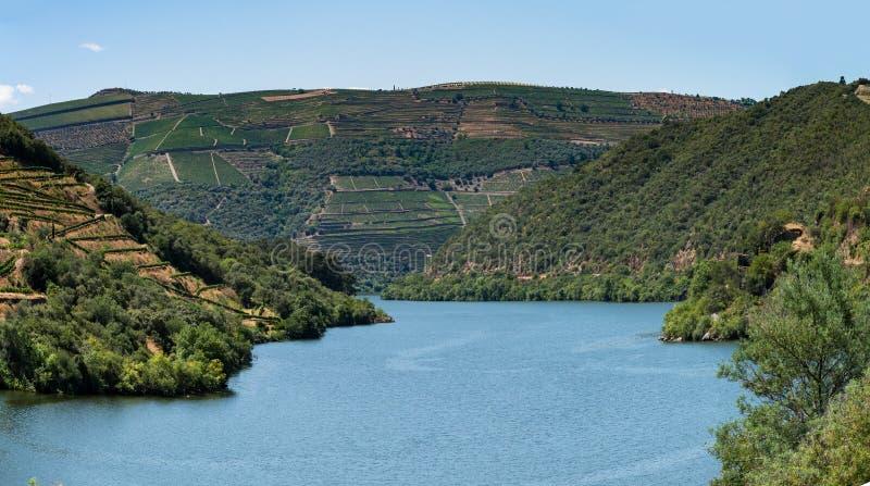 Standpunt van terrasvormige wijngaarden in Douro-Vallei wordt geschoten die royalty-vrije stock foto