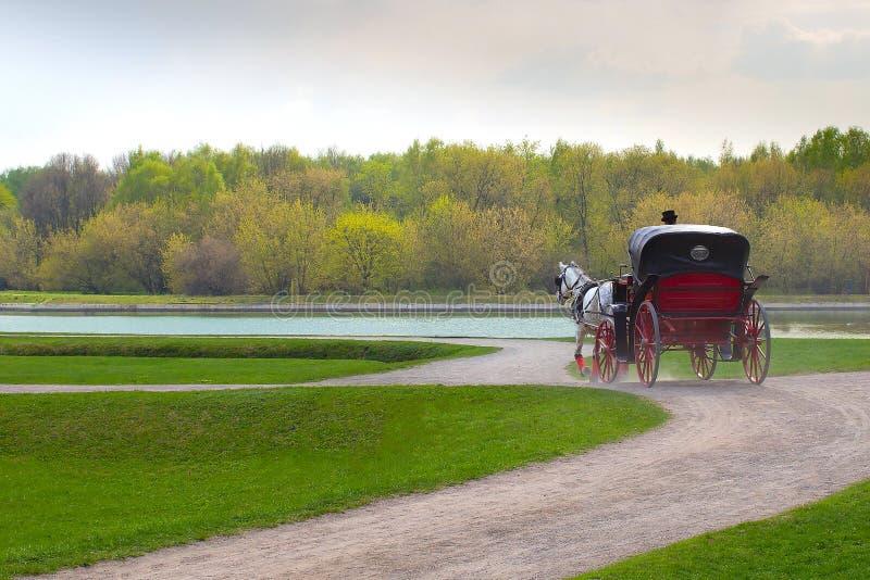 Stangret w pelerynie siedzi w trenerze z koniem i chwyt ogranicza w wiosna parku zdjęcie stock