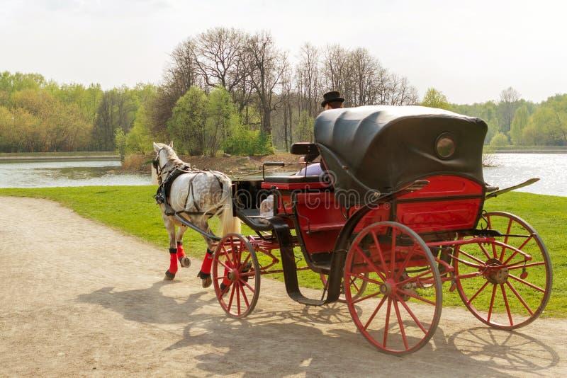 Stangret w pelerynie siedzi w trenerze z koniem i chwyt ogranicza w wiosna parku fotografia royalty free