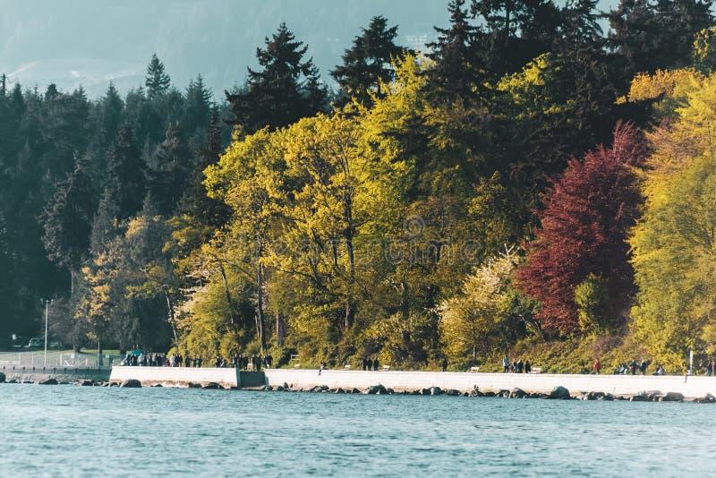 Stanley Park-Ansicht von der englischen Bucht in Vancouver BC Kanada lizenzfreies stockbild