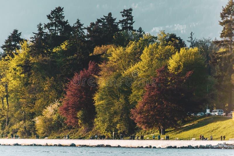 Stanley Park-Ansicht von der englischen Bucht in Vancouver BC Kanada stockfoto