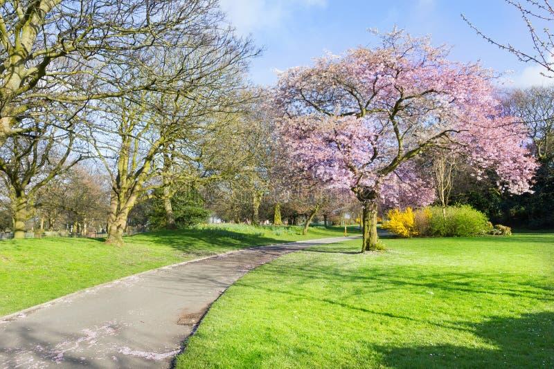 Stanley Park Liverpool, England arkivfoto