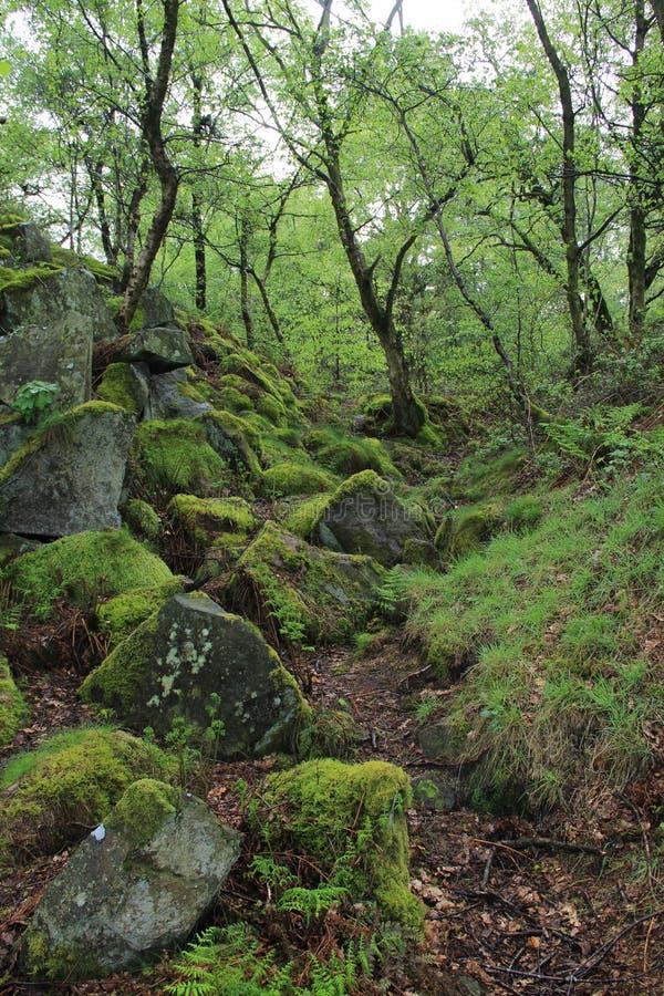 Stanton Moor, Derbyshire, Vereinigtes Königreich lizenzfreies stockbild