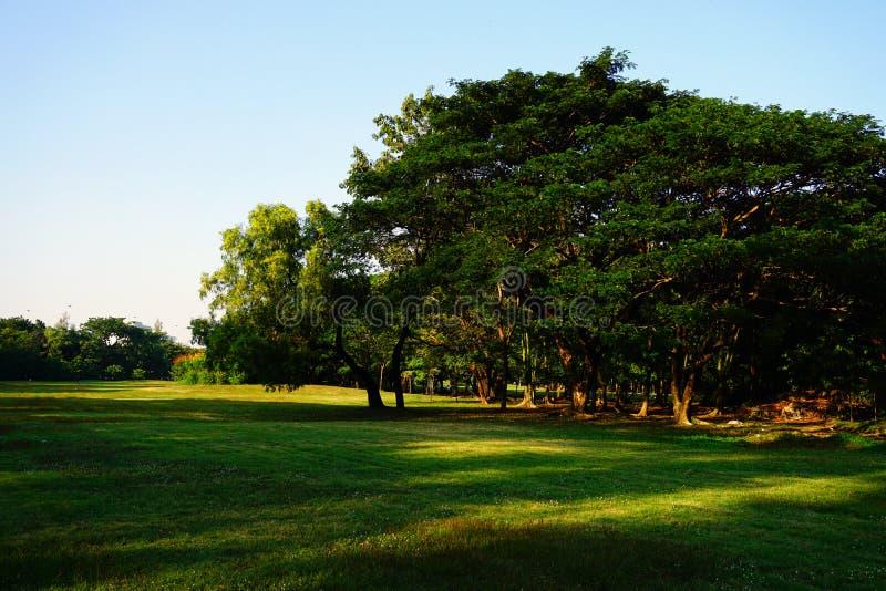 Stanu Kolejowy Jawny park jest imieniem jawny park w Chatuchak okręgu, Bangkok, Tajlandia obrazy royalty free
