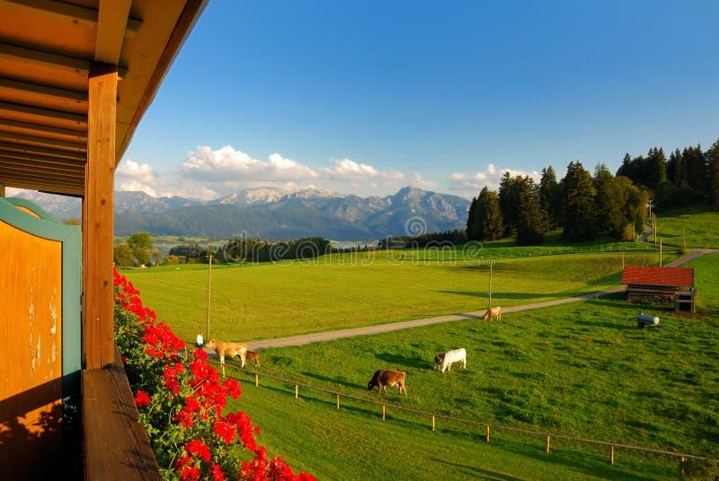 Stanza con la vista alpina immagini stock libere da diritti