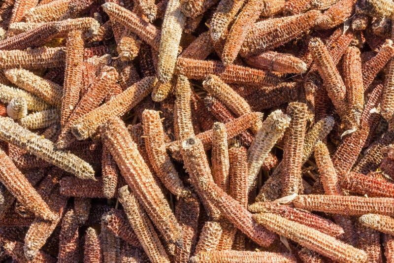 Stapel der leeren Maiskolben nachdem dem Kernentfernen stockbild