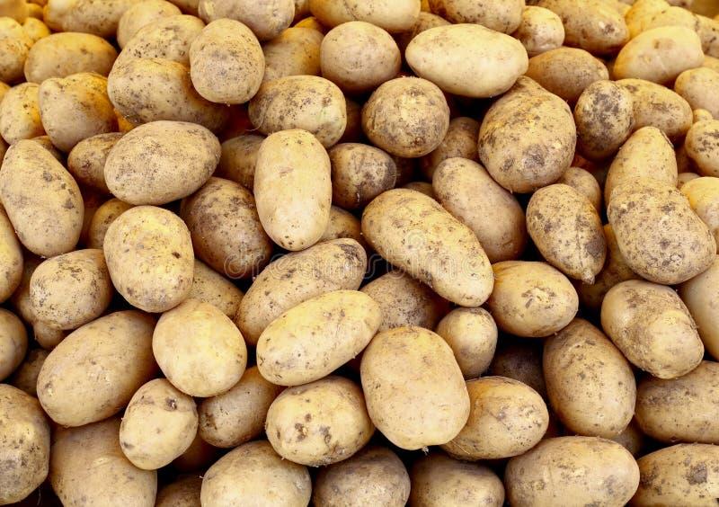 Stapel der rohen Kartoffeln lizenzfreies stockfoto