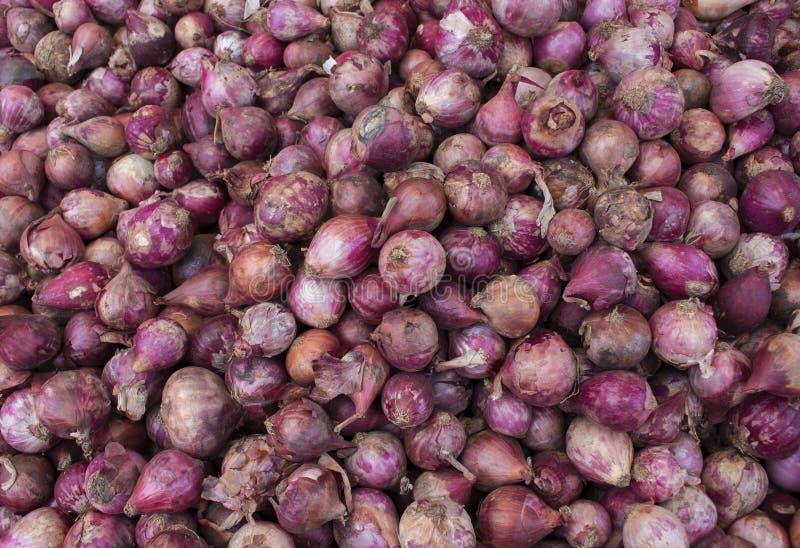 Stapel der roten Zwiebeln auf Marktanzeige Frische rote Zwiebel für Verkauf Herbsternte im Garten stockfotografie